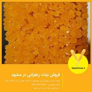 فروش نبات زعفرانی در مشهد